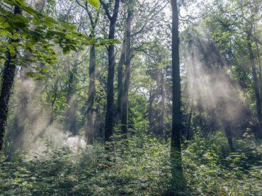 obora hvezda, tapety , zed, fototapety, priroda, letohradek hvezda, krajina, les, fotograf, praha